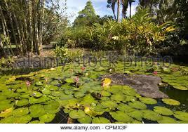 Nani Mau Gardens Hilo Hawaii Stock Royalty Free Image