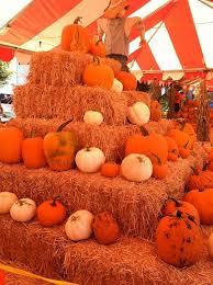 Jumbos Pumpkin Patch Groupon by Pasadena Pumpkin Patch Pasadena Ca