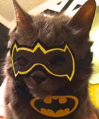 cat batman costume batman cat costume cowboys and crossbones