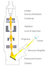LON CAPA Botany online Microscopy Electron Microscopy
