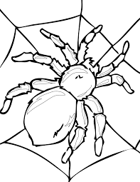Spider Insect Coloring Pages