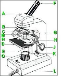 Difference between Light Microscope and Electron Microscope