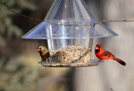 Bird Feeding Taking Wing By The Million In Minnesota - StarTribune.com Backyard Bird Watching House Finch Nest 5 Weeks Complete Feeding Finches Graycrowned Rosyfinch Audubon Field Guide Free Images Nature Wilderness Branch Seed Animal Summer At Feeder Stock Photo Image 82153967 How To Offer Nyjer Birds Birding Two Great Books For Those Who Enjoy Pet Upside Down Wild Tube Essentials Triple Supoceras Ornithology Finch Breeding Attract Goldfinches Your Dgarden Sfv Idenfication San Fernando Valley Society