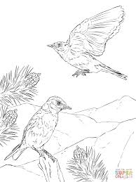 Click The Mountain Bluebird Coloring Pages