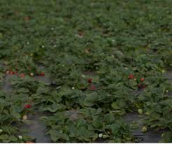Pinery Bonita Pumpkin Patch by San Diego And Imperial Counties In California Pumpkin Patches