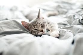 wenn die katze mit im bett schläft die vorteile und nachteile