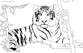 Obsession Free Printable Wild Animal Coloring Pages Tiger For Kids