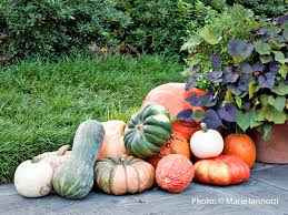 What Kinds Of Pumpkins Are Edible by There U0027s More To Squash Than Zucchini And Acorns