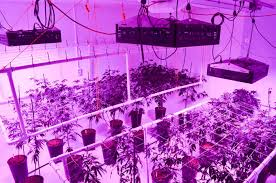 LED Grow Lights Take f with LightRail Light Movers
