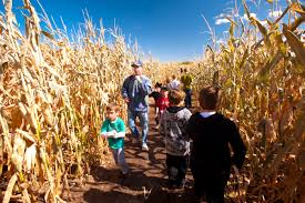 Denver Pumpkin Patch Corn Maze by Botanic Gardens Haunted Corn Maze Fasci Garden