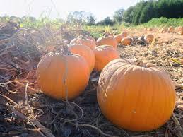 Burts Pumpkin Farm 2015 by 10 Pumpkin Patches To Visit In Georgia This Fall Tripstodiscover Com