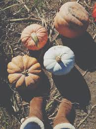 Schaake Pumpkin Patch by Thisis40 Week 3 In Pictures Dine And Dish