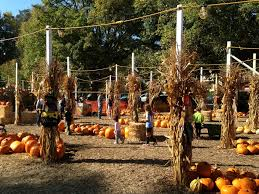 Half Moon Bay Pumpkin Patch 2017 by Best Pumpkin Patches Across The Bay Area
