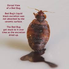 Blog Toronto Bed Bug