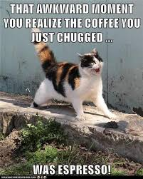 Animals Cat Chug Espresso Caption