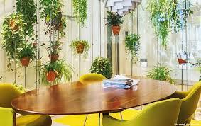 arndt grün erleben top 5 büropflanzen