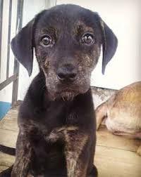 100 do shar pei lab mix shed 10 heart melting basset hound