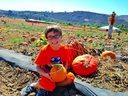 Irvine Pumpkin Patch Tanaka by Five Best Pumpkin Patches In Orange County Oc Mom Blog