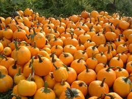 Pumpkin Patch Fayetteville Arkansas by 10 Beautiful Pumpkin Patches In Virginia Scoutology Cville