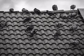 tile roof noblesville roofer home improvement