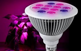 lighting 9 best indoor plants for low light apartments
