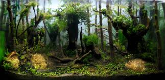 Aquascape Of The Month June 2015: