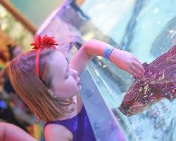 Deal: NOW VALID ALL SUMMER! SeaQuest Admission Tickets Or Ultimate  Experience Package | CertifiKID Kids And Sharks A Fun Morning At Seaquest Las Vegas Vintage Blue Under The Sea Interactive Aquarium Discount Tickets New Attraction Comes To Planned For River Ridge Mall In The Salt Project Things Do Planned Aquarium Folsom Faces Community Opposition Deal Now Valid All Summer Admission Tickets Or Ultimate Experience Package Certifikid Seaquests Problems Extend Beyond Discount Opening United Moms Network Quest Coupons Mk710 Deals
