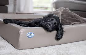 darum sind schlaf und ruhephasen bei hunden wichtig sabro