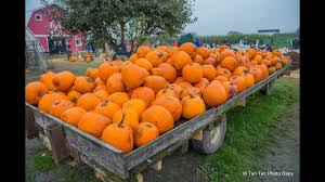 Underwood Farms Pumpkin Patch Hours by Pumpkin Patch At Rondriso Farms Surrey Youtube