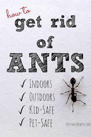 Flying Ants In Bathroom Window by How To Get Rid Of Ants And Keep Them Away For Good