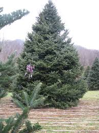 Christmas Tree Farms In Boone Nc by River Ridge Tree Farms About Us
