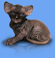 hairless cat price sphynx cattery baby rah sphynx cat sphynx kittens