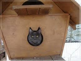 cat in house cat in cat house pictures of animals