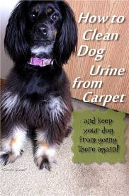 My Dog Pees On My Bed by Best 25 Cleaning Dog Ideas On Pinterest Dog Dog Urine