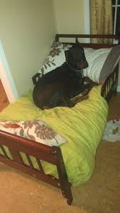 Extra Large Orthopedic Dog Bed by Best 25 Large Dog Beds Ideas On Pinterest Large Dog Bed Diy