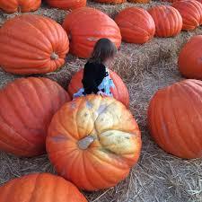 Oak Glen Pumpkin Patch Address by Seasonal Nappies Milk