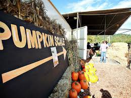 Swan Farms Snohomish Pumpkin Patch by The Best Pumpkin Patches Near Seattle Mapped Fairbanks Farm