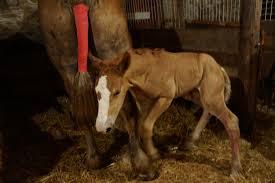 Lodi Pumpkin Patch Wisconsin by Today U0027s Moment Of Cuteness Newborn Foal At The Treinen Farm