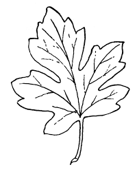 Fall Leaf Black And White Clipart 1