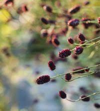 biblioth鑷ue chambre gar輟n les 48 meilleures images du tableau green sur plantes