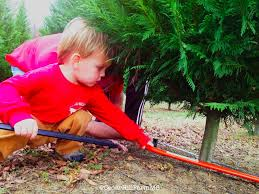 Santa Cruz Ca Christmas Tree Farms by 237 Best Christmas Tree Farm Images On Pinterest Christmas Tree