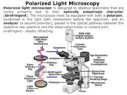 Lecture 2 Optical Microscopy ppt video online