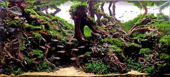 AQUAdesign: The Diorama Aquascape An Inrmediate Guide To Aquascaping Aquaec Tropical Fish Most Beautiful Aquascapes Undwater Landscapes Youtube 30 Most Amazing Aquascapes And Planted Fish Tank Ever 1 The Beautiful Luxury Aquaria Creating With Earth Water Photo Planted Axolotl Aquascape Tank Caudataorg 20 Of Places On Planet This Is Why You Can Forum Favourites By Very Nice Triangular Appartment Nano Cube Aquascape Nature Aquarium Aquascaping Enrico A Collection Of Kristelvdakker Pearltrees
