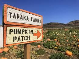 Tanaka Farms Pumpkin Patch by Sanrio Brings Hello Kitty U0026 Friends To Tanaka Farms In Irvine