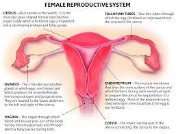 Uterus Lining Shedding During Pregnancy by Ajit Vadakayil Abnormal Uterine Bleeding Capt Ajit Vadakayil