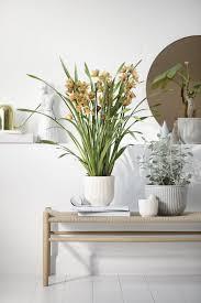 trend pflanzen deko tipps connox magazine topfblumen