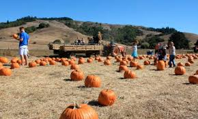 Pumpkin Patch Near Bay Area by Family Halloween Events In Marin U0026 The Bay Area Marin Mommies