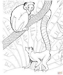 Dibujo De Lémur De Cola Anillada En El Zoológico Para Colorear