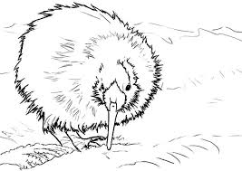 New Zealand Kiwi Bird Coloring Pages
