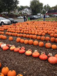 Pumpkin Picking Staten Island 2015 by 10 4 2015 Long Run 2 40 P M 20 Miles Central Park Loop X 3 3